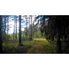 Шикарный земельный участок на опушке соснового леса