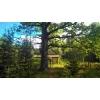 Сказочный земельный участок под строительство на лесной опушке